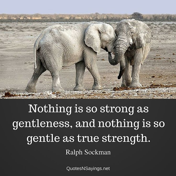 """Ralph Sockman quote about strength - """"Nothing is so strong as gentleness, and nothing is so gentle as true strength."""""""