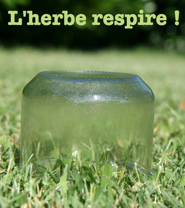 Cette expérience scientifique facile peut être réalisée quasiment partout : il suffit qu'il y ait un peu de pelouse et un chemin de terre / bitume / cailloux. L'objectif est de montrer que les plantes (et en particulier l'herbe) respirent également (et éventuellement d'embrayer le le phénomène de photosynthèse) Matériel nécessaire pour mener à bien l'expérience Vous aurez besoin  de deux bocaux en verre transparents et propres ou des verres assez grands de soleil ou du moins d'un temps ...