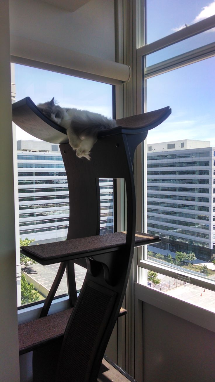 17 best images about feline fan photos on pinterest cats for Bookshelf cat tower