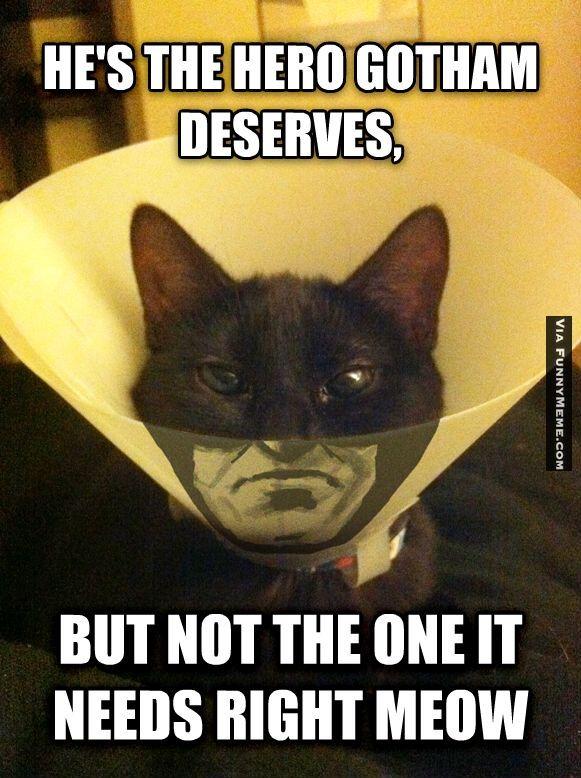 Funny Cats Falling Cats Cute Cats Hilarious Cats Internet Cats