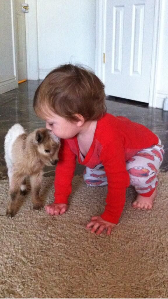 """""""You can stand yourself back up,"""" the tiny goat said to the baby, """"but I'm just going to head butt you and knock you down again."""""""