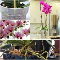 sorgen sie um ihre orchideen