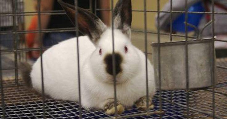 Como fazer uma gaiola para coelhos usando uma caixa para transporte de cachorros. As gaiolas para coelho novas podem ser caras. Caso você tenha uma caixa para transporte de cachorros que não seja usada, por que não transformá-la em uma gaiola para coelhos? As instruções dadas são para fazer uma gaiola para coelhos pra fora de casa independente. Entretanto, para usá-la no interior para o seu coelho siga as dicas dadas para ...
