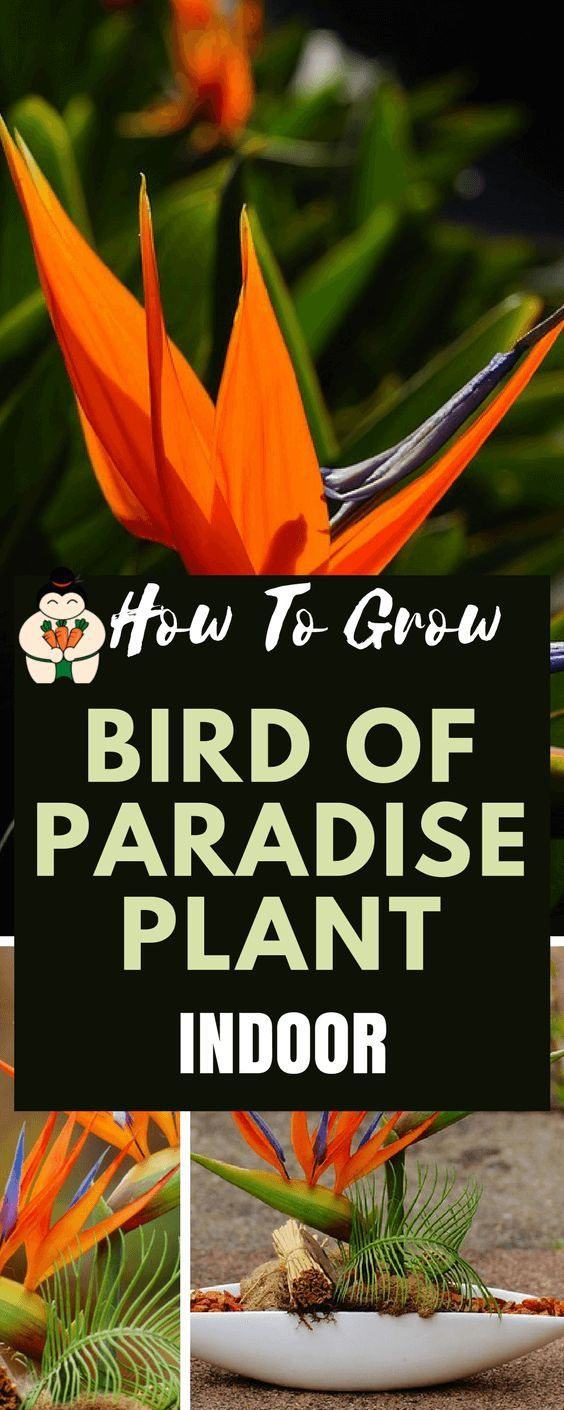 best Gardening images on Pinterest Gardening Growing