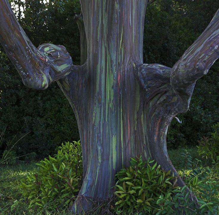 89 Best Nature Art Images On Pinterest