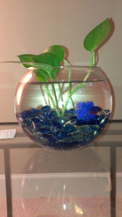 I love putting these fish bowls together betta fish for Betta fish care water