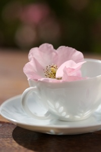 Flower in a teacup  from Food from the heart. Courtesy of Lapa Publishers, photo by Adriaan Vorster