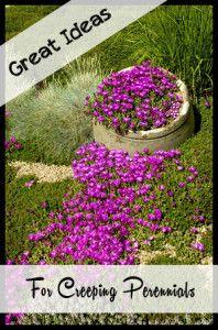 Great Ideas for Creeping Perennials