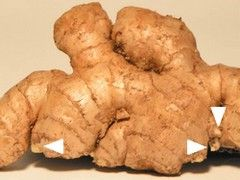 How to grow ginger in a patio container.
