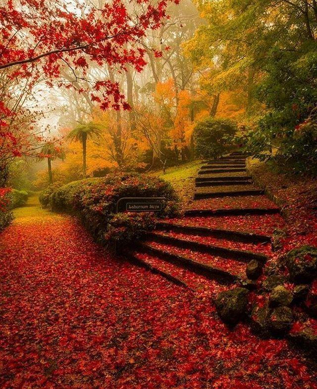 Breenhold Gardens Mt Wilson, Australia.Photo by @kalanrobb #discover_earthpix