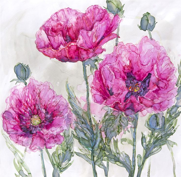 Pink Opium Poppies (JT03) Pink Floral Art Print by Jess Trotman http://www.thewhistlefish.com/product/jt03f-pink-opium-poppies-framed-art-print-by-jess-trotman