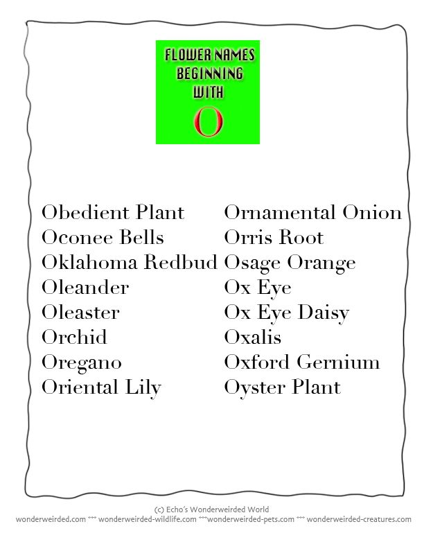 A List Of All Flowers Name Beginning With O From Our Flowers Name