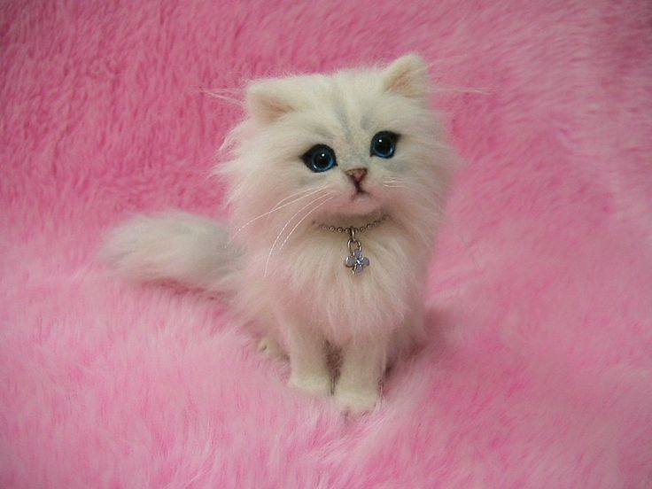 I can't believe this is not a real cat! It is needle felting.