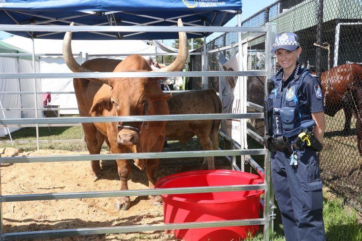 No bull at Beef Week 2015 in Rockhampton