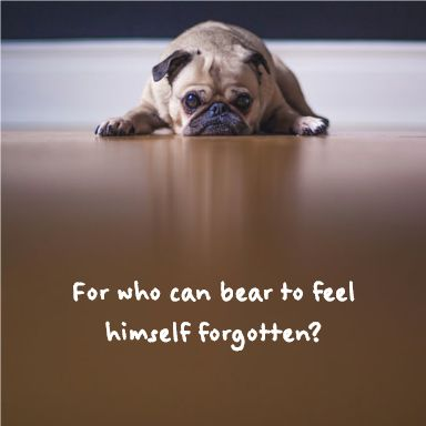 75592070b65789f1da8e8a809f0c3839 pug dogs pugs 11 best animals images on pinterest poem, poems and poetry