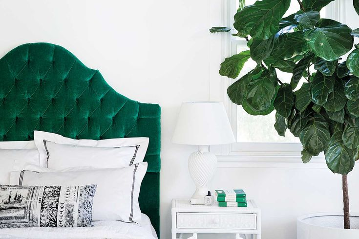 How to rescue your fiddle leaf fig