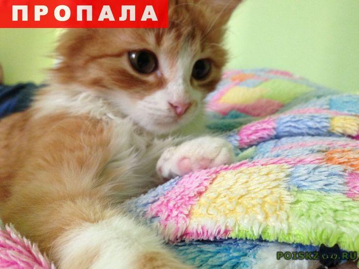 Пропал котик по кличке шнапс г.Севастополь http://poiskzoo.ru/board/read31701.html  POISKZOO.RU/31701 Пропал молодой котик, ему .. год, по клички Шнапс, окрас рыжий с белой грудкой  РЕПОСТ! @POISKZOO2 #POISKZOO.RU #Пропала #кошка #Пропала_кошка #ПропалаКошка #Севастополь