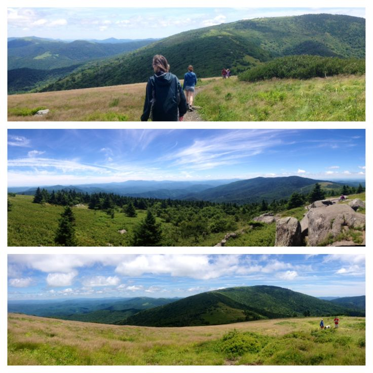 Roan Mountain State Park: 13 Best Images About Roan Mountain State Park Tn On