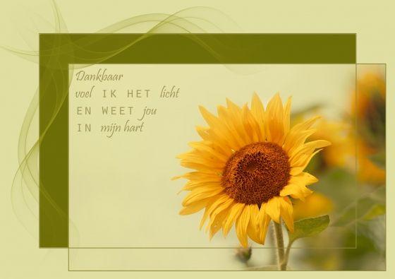 Zonnebloem omhoog gericht (Tekst: Ingrid Aanen / Fotografie: Ellen Driesse)