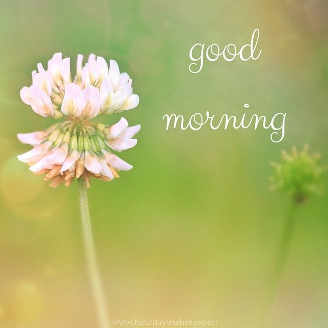 60 Good Morning Images With Beautiful Flowers Updated