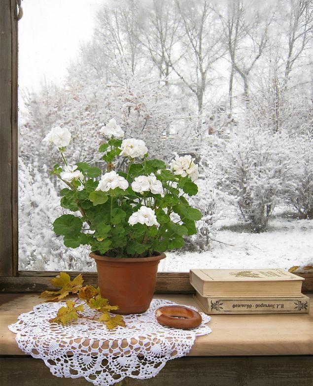 Фото с добрым утром цветы зима