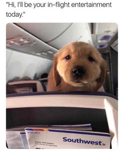 35 Super Funny Memes Winning Pinterest Ladnow Cute Funny Dogs Cute Animals Funny Animal Memes