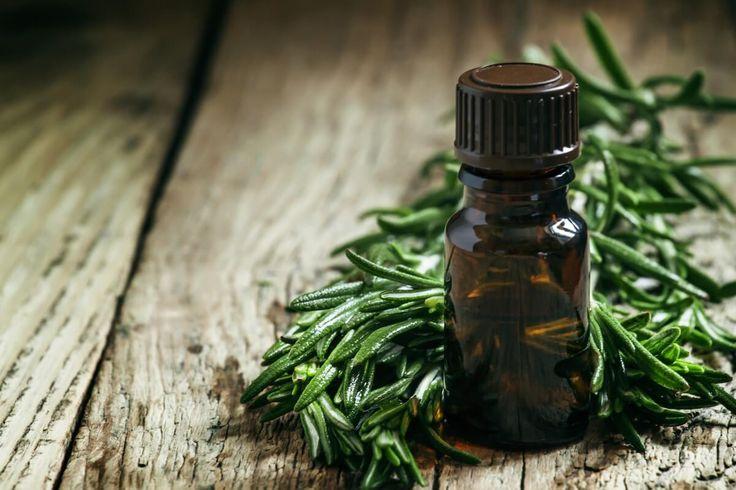 Эфирное лекарство от многих недугов – ценное масло чайного дерева