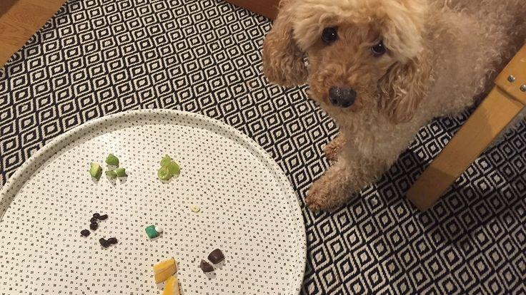 Mitkä kielletyt ruoat houkuttelevat koiraa eniten? Testasimme – koiraystävällisesti tietenkin!   http://www.mtv.fi/lifestyle/koti/artikkeli/mitka-kielletyt-ruoat-houkuttelevat-koiraa-eniten-testasimme-koiraystavallisesti-tietenkin/5622858