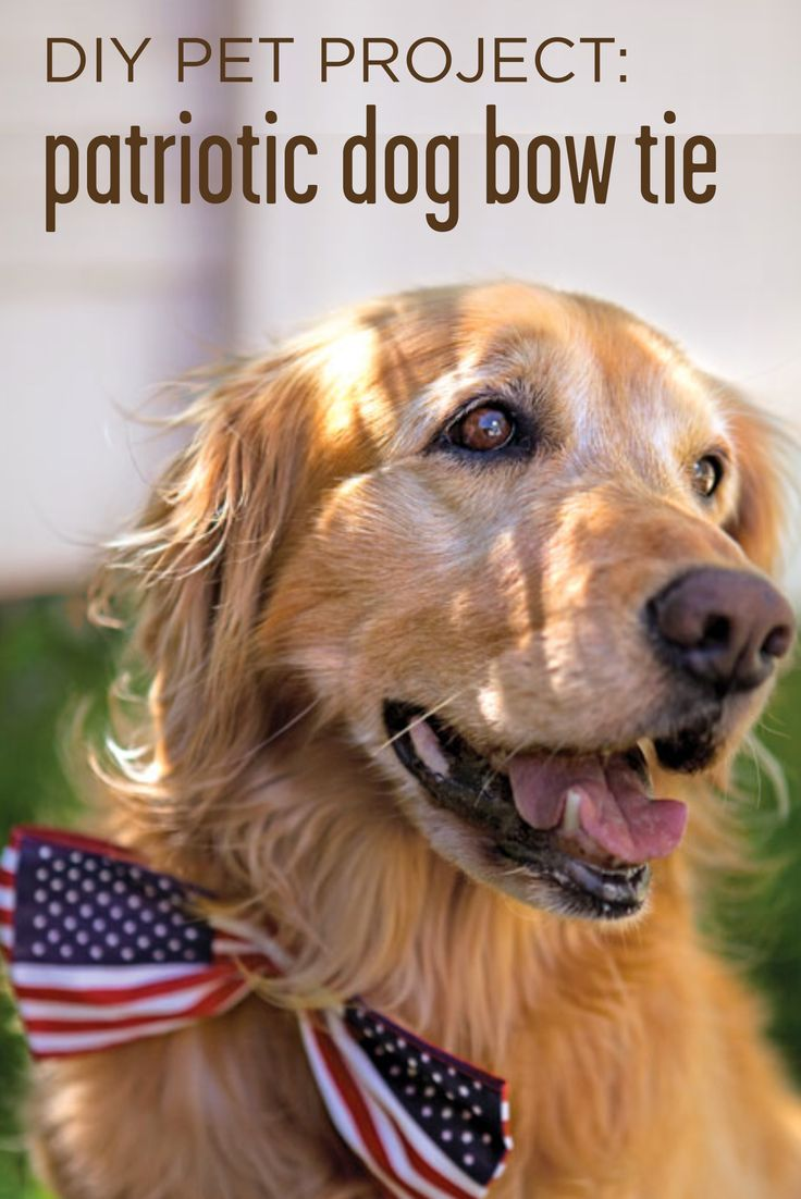 With this #easy and #patriotic #DIY, your pooch will be the star of your 4th of July celebrations! #MarthaStewartPets #petcare #pettipsDogs Bows, 4Thofjuly, Bows Ties, Bow Ties, Fourth Of July, July Crafts, 4Th Of July, Dog Bows, Golden Retriever