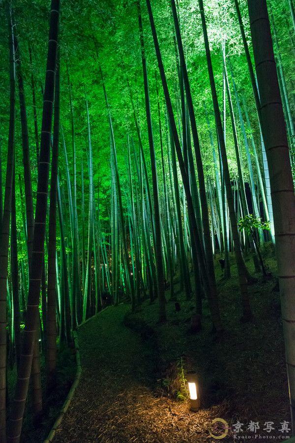 Night shines blue bamboo forest by Haruka Suzuki on 500px