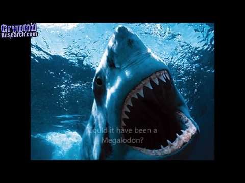 Megalodon Shark Attack - Documentary Discovery of Monster that Eats Great White - CR 2.0 Official - YouTube