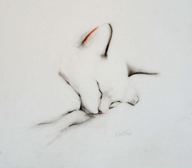 Sleeping Cat in September, Pencil drawing by Kellas Campbell   Artfinder