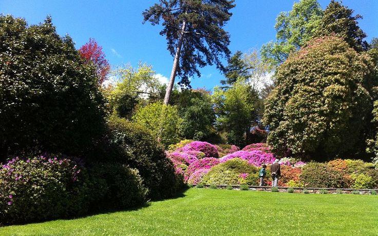Giardino-Villa-Carlotta-Tremezzo  Giardini da sogno a confronto: Villa Carlotta e Villa Melzi (7 ore) guidecomo