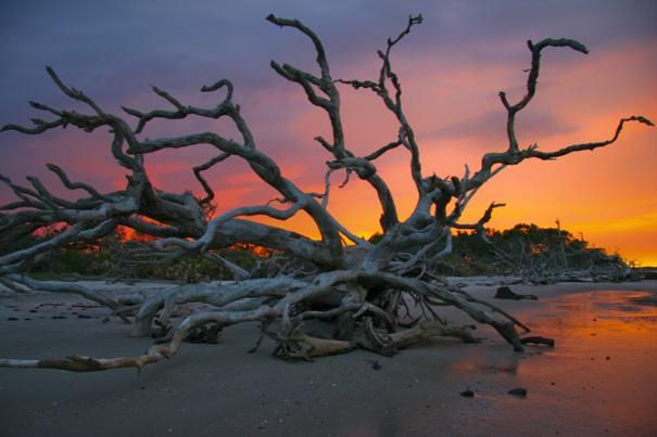 Driftwood Beach, Jekyll Island - experienced this place today and was in awe!  Natural beauty...