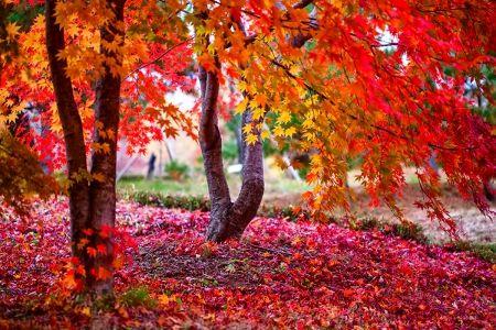 November Desktop Nexus Wallpapers Autumn Pinterest