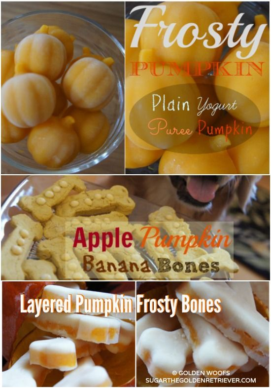 Make Your Own Dog Safe Pumpkin Puree