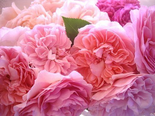 #flowers #pink #inspiration