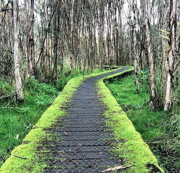 Balcombe Creek Boardwalk, Mount Martha. Mornington Peninsula, Victoria, Australia. Photo: KateWalker_Design