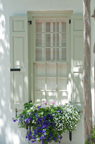 Window box  in Charleston, SC.: Window Boxes Flowers, White Houses, Charleston Sc, Exterior Shutters, White Shutters, Beautiful Window, Flowers Boxes, Chicken Houses, Planters Boxes