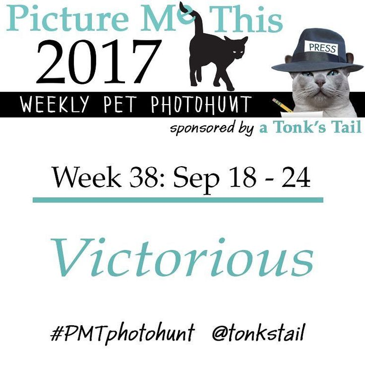 WEEK 38 #photohunt theme: VICTORIOUS. Calling all #pet lovers! #cat #dog #rabbit #ferret all join in! Posted ea Sunday @ 10AM CST. Use #PMTphotohunt so fellow hunters can find you! Preview upcoming themes @ http://bit.ly/PicMeThis #fun #games #photography