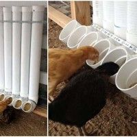 Kippen voeren met een zelfgemaakt systeem van pvc buizen.