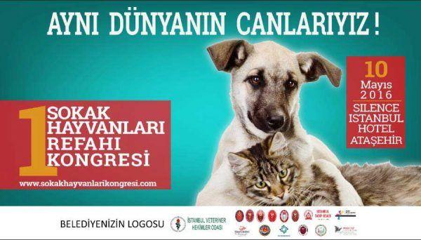 Sokak hayvanları ile ilgili bütün tarafların katılacağı ve bu alanda ilk kongre olma özelliğine sahip '1. Sokak Hayvanları Refahı Kongresi' Ataşehir'de toplanıyor Detaylar ajanimo.com'da.. #ajanimo #ajanbrian #hayvanhakları #sokakhayvanları #animal #hayvan #dog #köpek