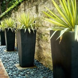Plant pot are such an easy way to create features in garden especially if you have a narrow area.