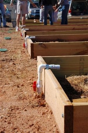 Raised bed irrigation by Cindy Roarty