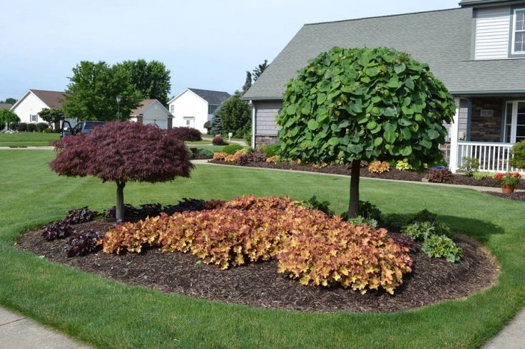 Huechera and lavender twist weeping redbud used in an for Garden scaping