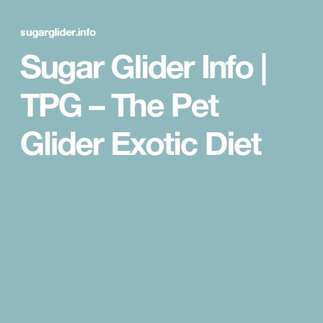 Sugar Glider Info | TPG – The Pet Glider Exotic Diet