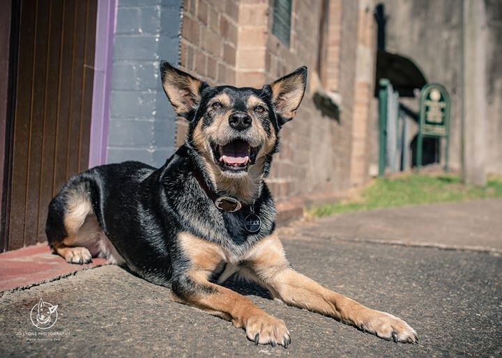 Senior dogs have a very special charm about them... they are generally wise and gentle, and have a relaxed demeanour about them compared to dogs in their puppyhood and teenage years. They make incredible companions and there are many, many of them out the