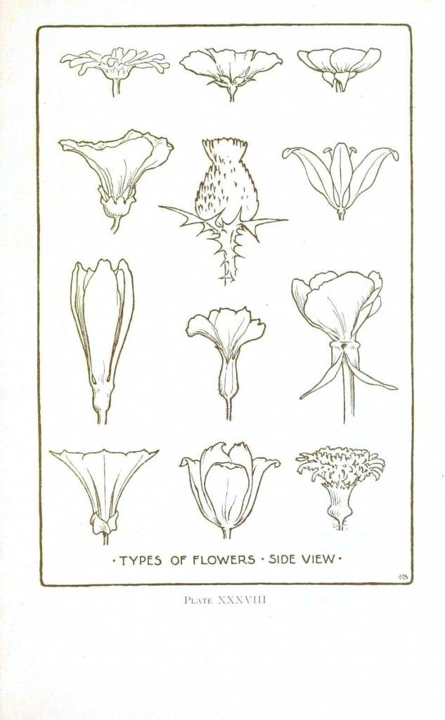 Botanical – Flower – Flower line drawings