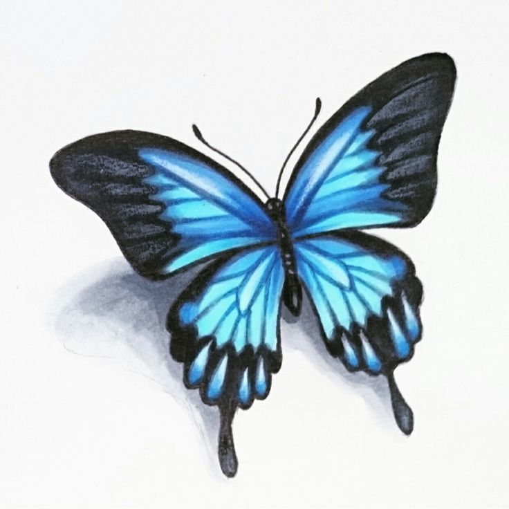 25 Great Ideas About Realistic Butterfly Tattoo On: 15+ [ Roses With Butterflies Tattoos ]