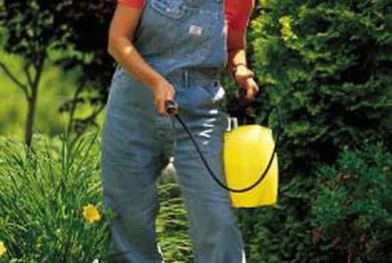 reverdir pelouse avec bière et liquide vaisselle